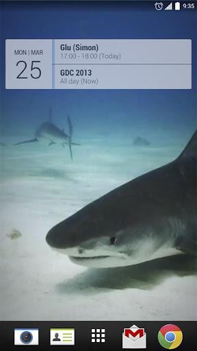 Underwater White Shark LiveWP