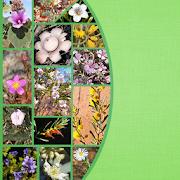 App Icon for Plants Fungi SW NSW Australia App in Czech Republic Google Play Store