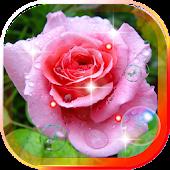 Morning Roses live wallpaper