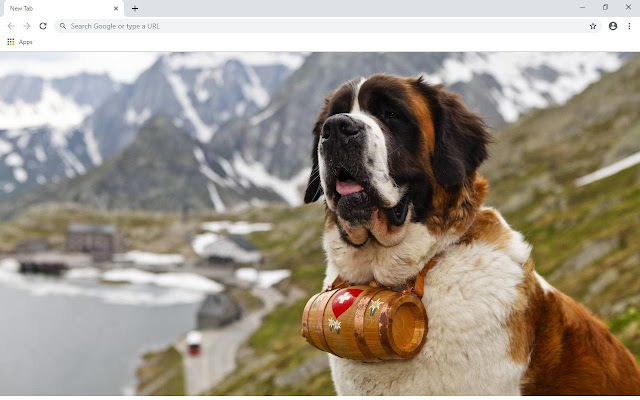 Saint Bernard Wallpapers and New Tab