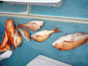 Photo: 真鯛、アカイサキ・・・