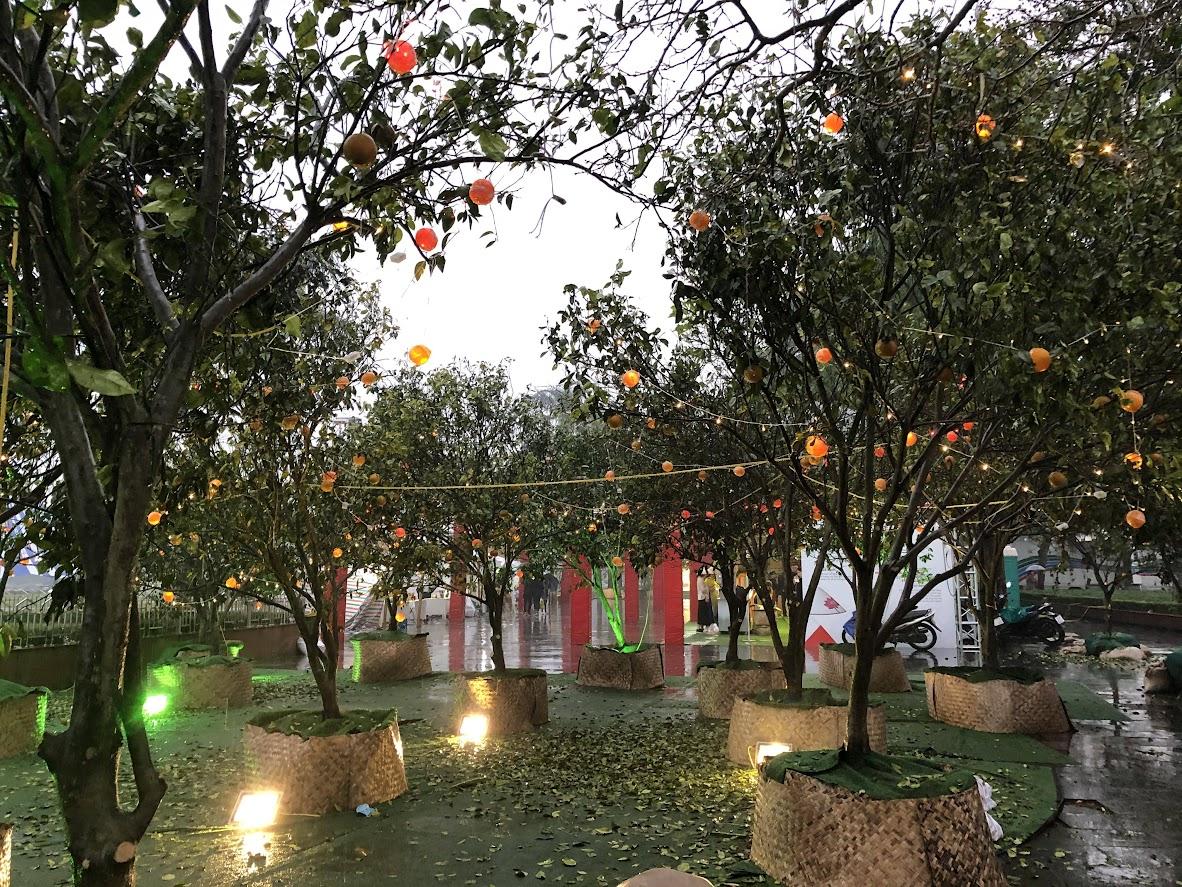 Cả vườn cam được dựng lên trong khuôn viên lễ hội