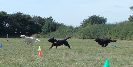 Photo: Jamie Golden, Dicer Lab and Tilly Labradoodle in the Fastest/Slowest Recall race