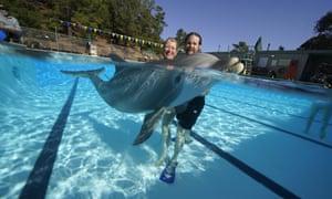 Animatronic dolphins in development