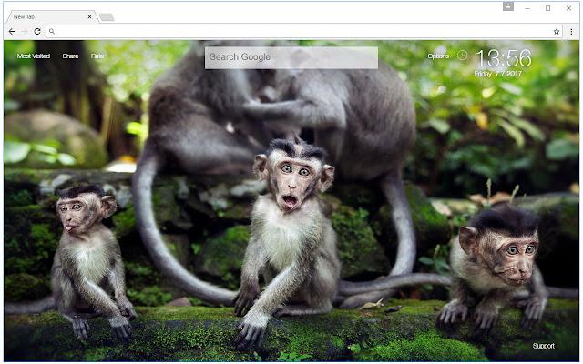 Monkey Wallpaper Hd New Tab Monkeys Themes