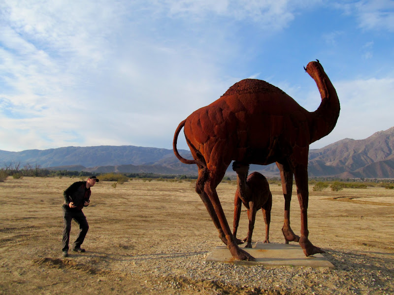 Photo: Camels