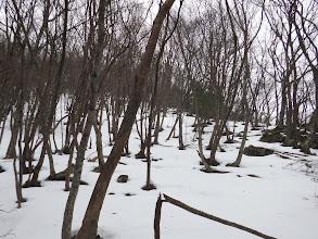 二次林の林となる