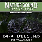 Rain & Thunderstorms (Eastern Woodland Forest)