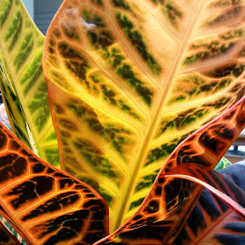 by Barbara Boyte - Nature Up Close Other plants (  )
