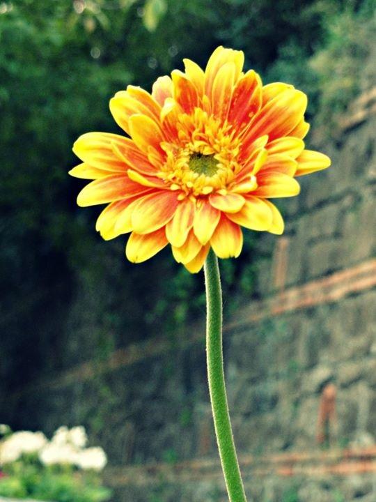Beautiful flower di Anastasia Trossi