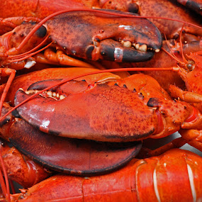 Pass the Butter by Jon Hurd - Food & Drink Plated Food ( seafood, boiled, claws. crustacean, lobster, delicious, cooked )