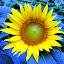 by Tina Banik - Flowers Single Flower (  )