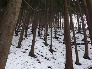 植林の急登