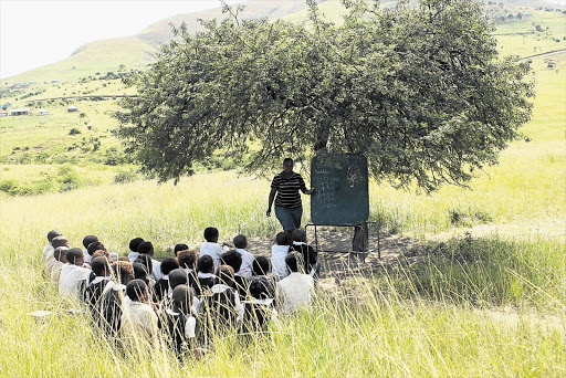 FIELD OF DREAMS: Pupils at Mwezeni Primary School in a Elliotdale, outside Mthatha in the Eastern Cape, learning under a tree this week