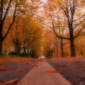 miles to go by Abhinav Ganorkar - City,  Street & Park  City Parks ( city parks, autumn, trees, landscapes, roads,  )