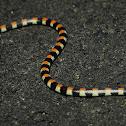 Centipede-ater Snake