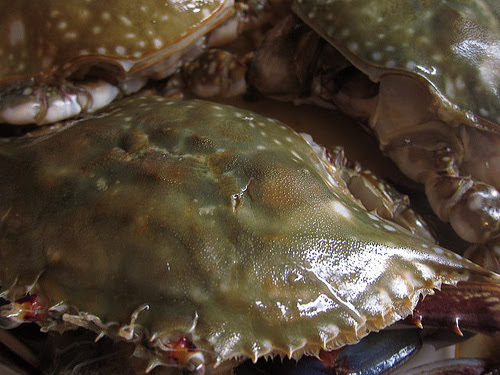 Chinese, Cold, Chilled, Crab, Vinegar Dip, cold crab, 凍, 花蟹, 凍花蟹, recipe, 潮州