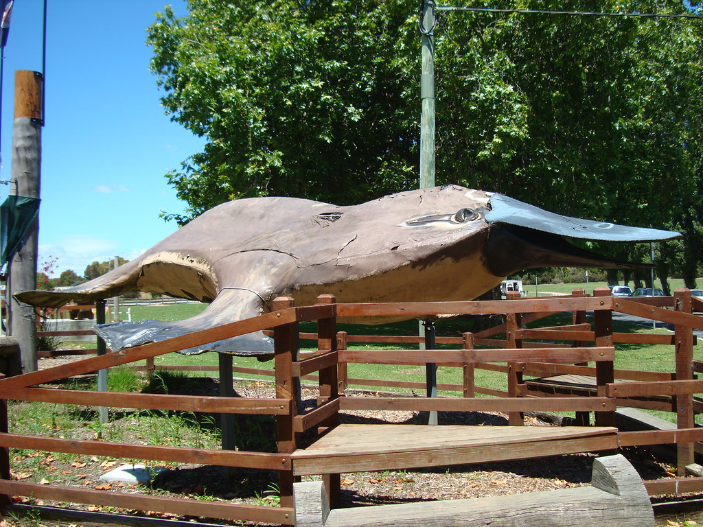 the big platypus sculpture in a fenced area