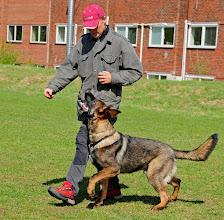 Photo: Oddmund og Loke 7 mnd trener fri ved fot