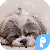 Cutie Puppy Icon Widgetpack
