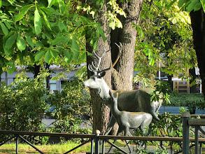Photo: Local wildlife