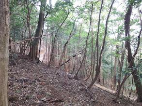 右下から林道が登る