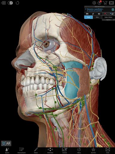 Human Anatomy Atlas 2019 for Springer Apk 2