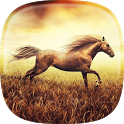 Horse Pictures Live Wallpaper icon