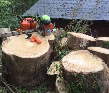 felling & forest clearance worcestershire