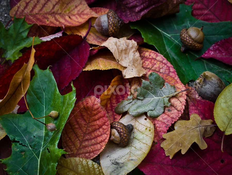 Waiting for Squirrels by Melissa S. Hunt - Nature Up Close Leaves & Grasses ( fall leaves on ground, fall leaves, nature, autumn, colors, fall, nuts, leaves )