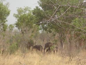 Photo: Elephants in Hwange