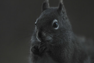 Photo: Squirrel eating as night falls (ISO 1600)