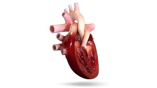 Vr human heart android apps on google play vr human heart screenshot thumbnail ccuart Gallery