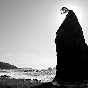 Seastack tree by Dan Allard - Landscapes Beaches ( rialto, washington, tree, seastack, beach, pwcbwlandscapes,  )