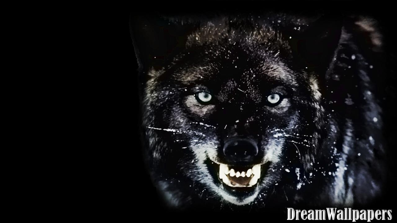 wolf images wallpaper impremedianet