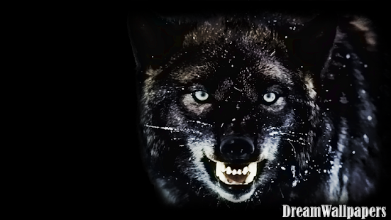 Black Wolf Wallpaper Apk For Iphone Download Android Apk Games