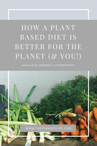How a plant based diet is better for the planet (& you!) | Eco-friendly living by The Foraged Life