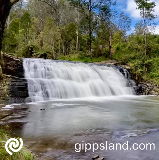 A walking trail takes you from the carpark past a series of stunning cascades in the upper reaches of the Morwell River in this oasis of native bush