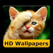 Cat Wallpaper & lustige Bilder