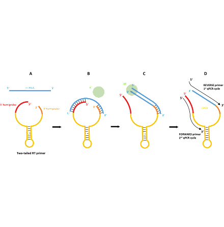 TATAA two-tailed miRNA assays