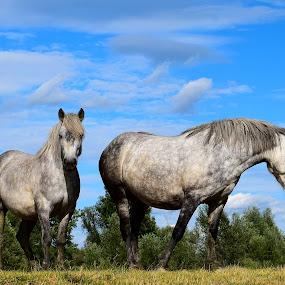 by Valentina Masten - Animals Horses