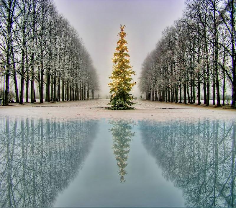 Solitary Christmas tree di Gianluca Presto