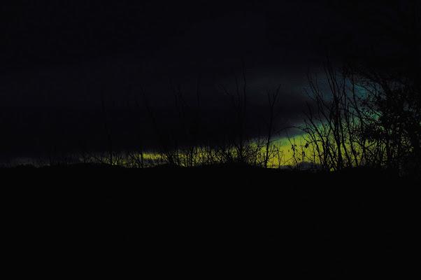 .... selva oscura ... di Tiz