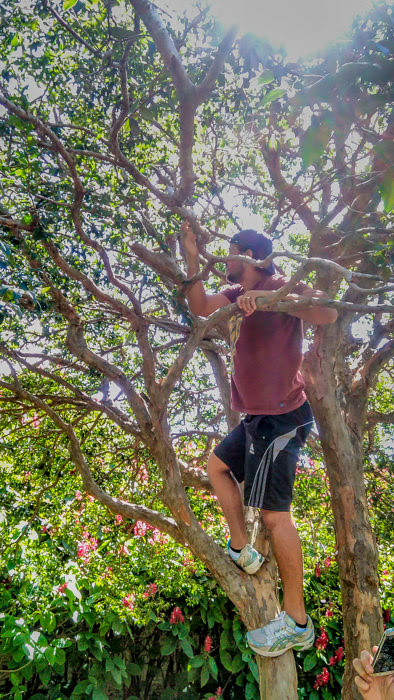 Our Brazilian travel friend climbing a tree in the botanical garden in Santa Cruz while traveling with us in Bolivia