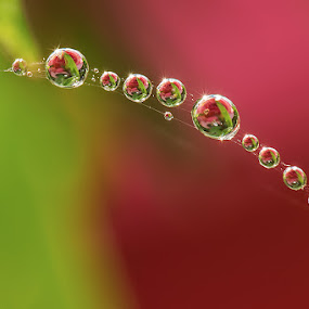 Just for you and keep the spirit... by Citra Hernadi - Abstract Water Drops & Splashes