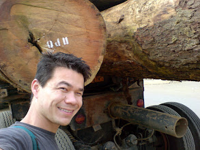Photo: Big, big logs