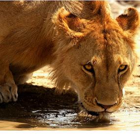 by Arun Acharya - Animals Other Mammals