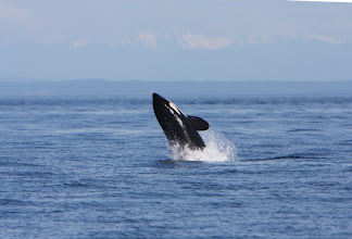 Photo: Victoria - Whale Watching