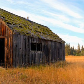 Mossy Roof 101418 by Anthony Balzarini - Buildings & Architecture Decaying & Abandoned ( #oldfarm, #abandoned, #decayingbuilding, #abandonedbuilding,  )