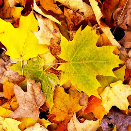 Falling by Beth Bowman - Nature Up Close Leaves & Grasses (  )